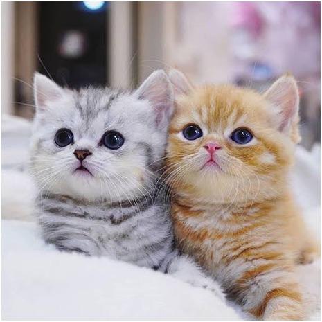 Simak 5 Tips Sederhana Perawatan Kucing Peliharaan Berikut Ini!